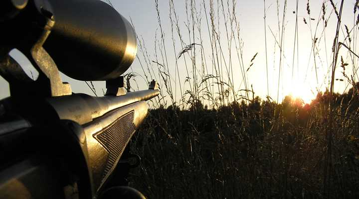 Arizona: Hunting Ban Initiative Suspended