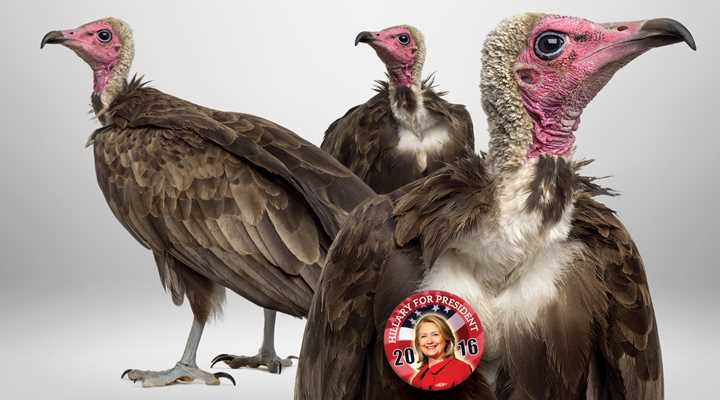 Heller's Vultures