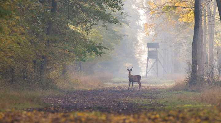 Delaware: Governor Signs Bill Legalizing Sunday Deer Hunting