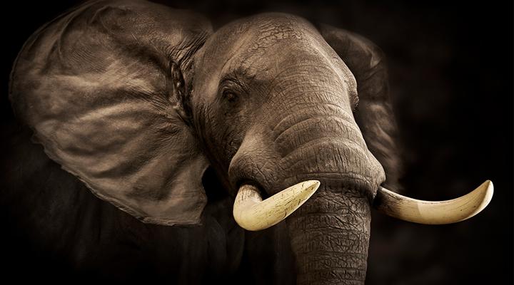 NRA's Seminar to Address Global Poaching Crisis