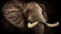 NRA's Seminar to Address Global Poaching Crisis